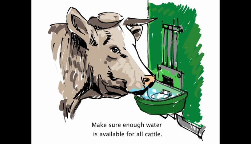 Cattle Video Ready Made By Animal Transport Guides Project